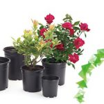 گلدان پلاستیکی گلخانه
